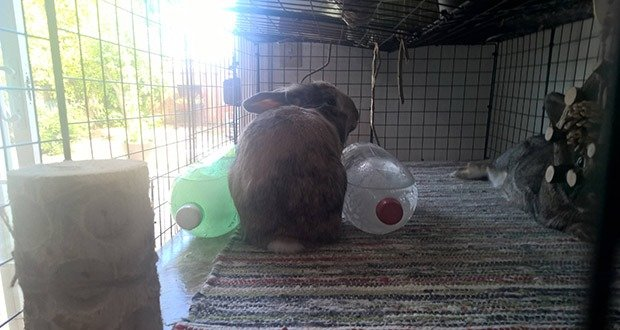06. Pets Struggling with Heat