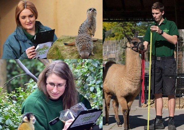 09. Love triangle with llama-keeper