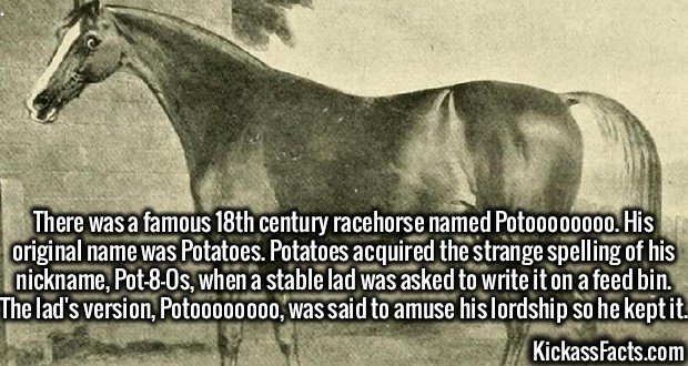 2727 Pot8os-There was a famous 18th century racehorse named Potoooooooo. His original name was Potatoes. Potatoes acquired the strange spelling of his nickname, Pot-8-Os, when a stable lad was asked to write it on a feed bin. The lad's version, Potoooooooo, was said to amuse his lordship so he kept it.