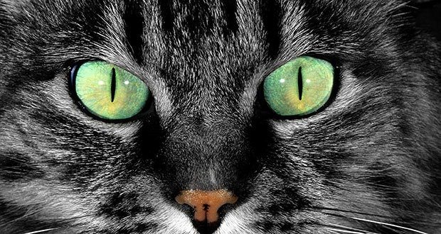 Cat Pupil