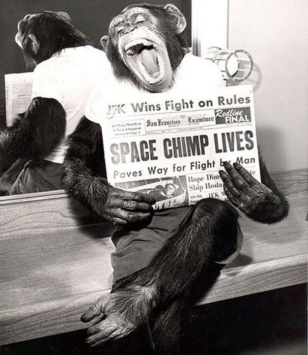 space chimp posing to camera