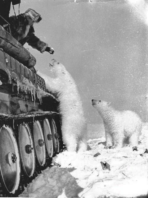 08. Polar Bears