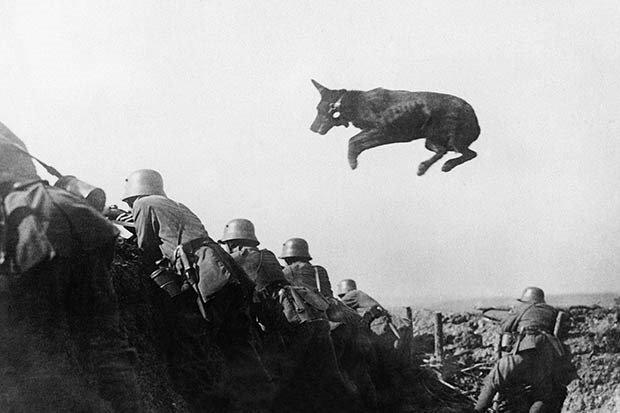 09. Dispatch dog