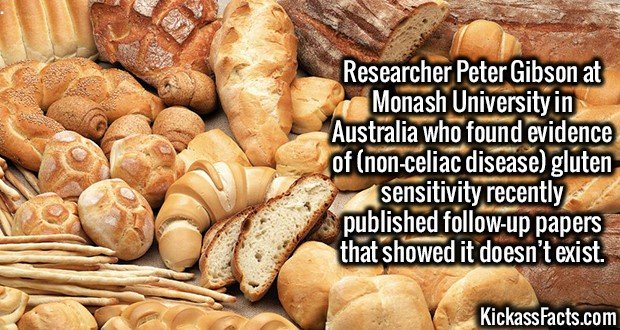 2860 Gluten Sensitivity-Researcher Peter Gibson at Monash University in Australia who found evidence of (non-celiac disease) gluten sensitivity recently published follow-up papers that showed it doesn't exist.