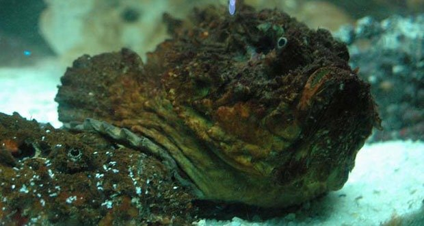 09. The Stonefish