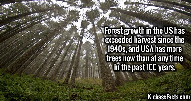 3016 Forest growth-Forest growth in the US has exceeded harvest since the 1940s, and USA has more trees now than at any time in the past 100 years.