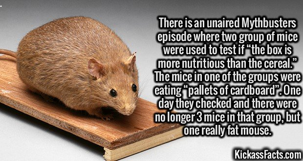 """3107 Cannibal Mouse-There is an unaired Mythbusters episode where two group of mice were used to test if """"the box is more nutritious than the cereal."""" The mice in one of the groups were eating """"pallets of cardboard"""". One day they checked and there were no longer 3 mice in that group, but one really fat mouse."""