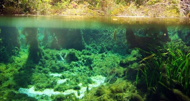 Alabama Underwater Forest