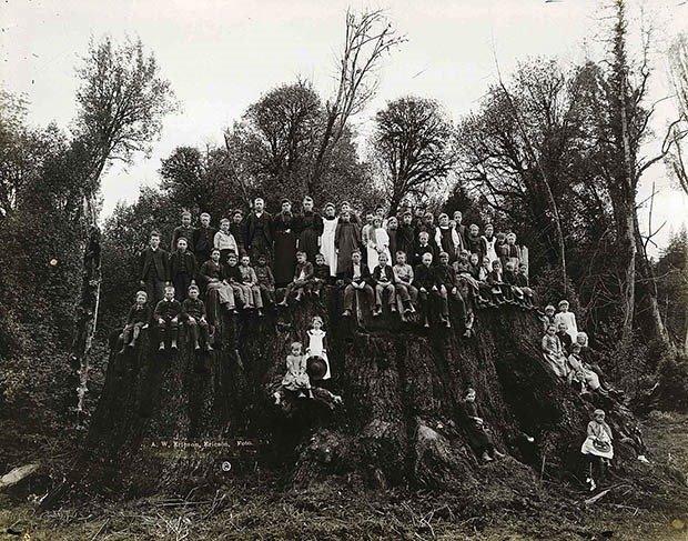 21. Fieldbrook stump