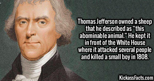 """3168 Thomas Jefferson Sheep-Thomas Jefferson owned a sheep that he described as """"this abominable animal."""" He kept it in front of the White House where it attacked several people and killed a small boy in 1808."""