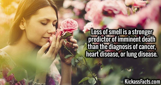 3190 Smell-Loss of smell is a stronger predictor of imminent death than the diagnosis of cancer, heart disease, or lung disease.