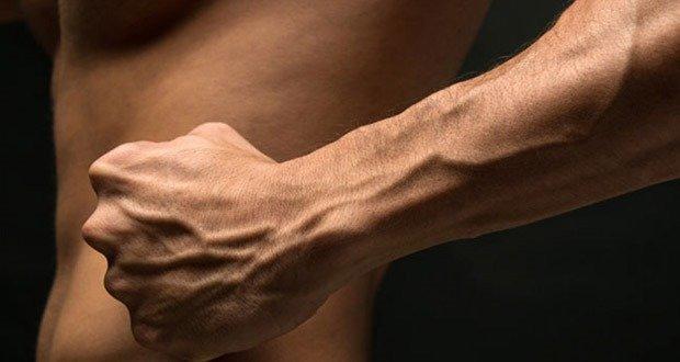 Vascular Forearm
