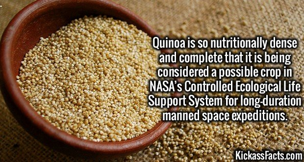 3318 Quinoa-Quinoa is so nutritionally dense and complete that it is being considered a possible crop in NASA's Controlled Ecological Life Support System for long-duration manned space expeditions.