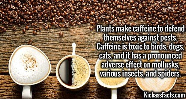3333 Caffeine