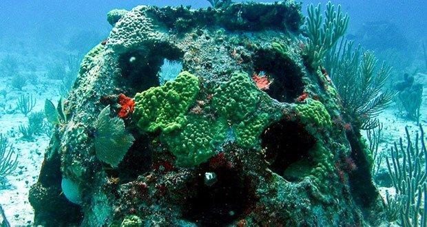 03. Eternal Reefs