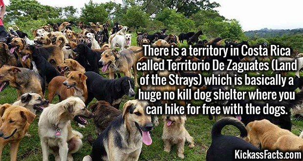 3516 Territorio De Zaguates-There is a territory in Costa Rica called Territorio De Zaguates (Land of the Strays) which is basically a huge no kill dog shelter where you can hike for free with the dogs.