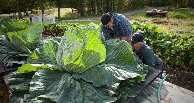 Alaska Vegetables