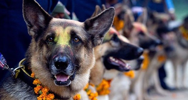 Tihar Dog Festival