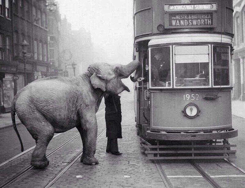 21. Elephant