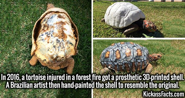 4004 3D Printed Shell-In 2016, a tortoise injured in a forest fire got a prosthetic 3D-printed shell. A Brazilian artist then hand-painted the shell to resemble the original.