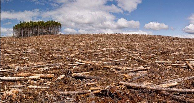Clearcut logging