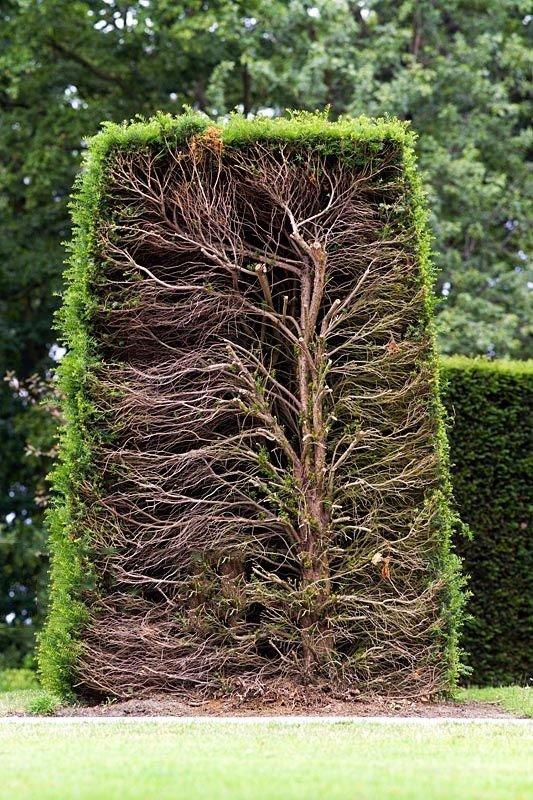 01. Mature Hedge
