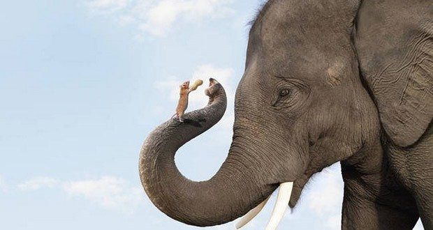 Elephant scared by a mouse