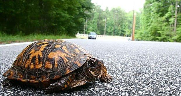 Trutle Crossing Road