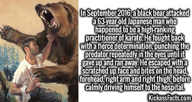 4202-bear-fighter-In September 2016, a black bear attacked a 63-year-old Japanese man who happened to be a high-ranking practitioner of karate. He fought back with a fierce determination, punching the predator repeatedly in the eyes until it gave up and ran away. He escaped with a scratched up face and bites on the head, forehead, right arm and right thigh, before calmly driving himself to the hospital.