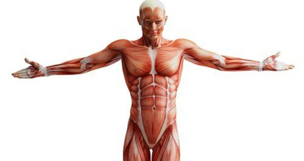 25 Interesting Facts About Human Body Part 6 Kickassfacts