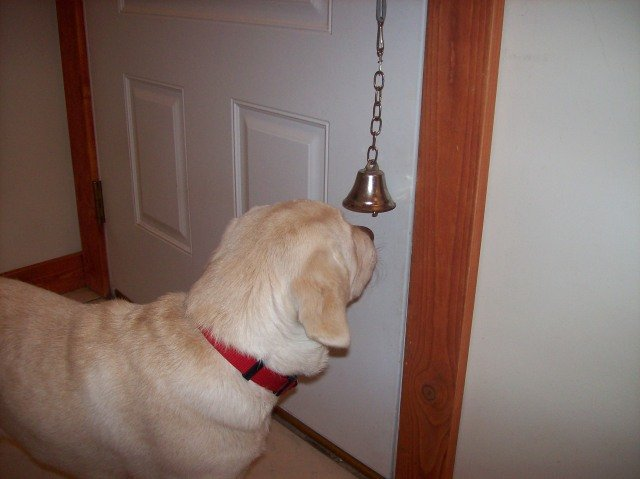 puppy ringing bell