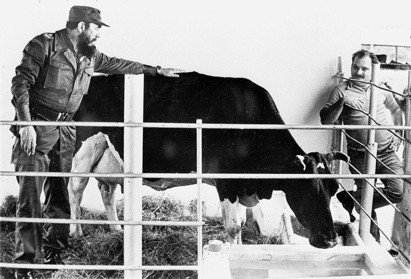 fidel-castro-with-cow