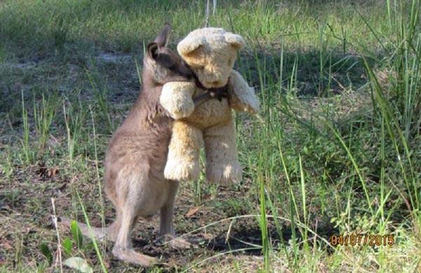 kangaroo-hugging-teddy-bear