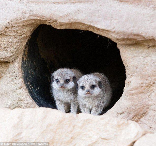 meerkat-bolt-holes
