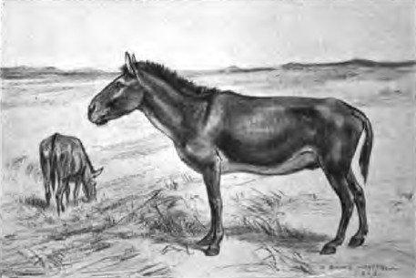 prehistoric-horses