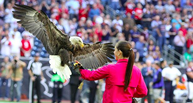 Bald-Eagle Challenger