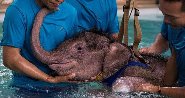baby-elephant-hydrotherapy