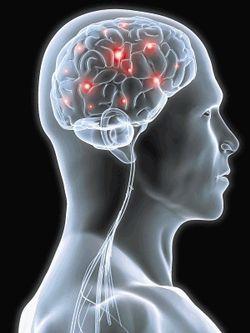 brain pain receptors