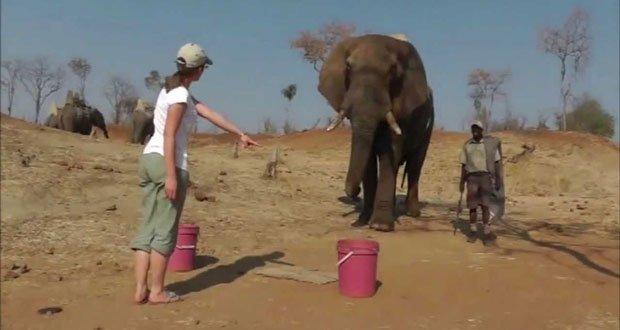 elephant-human-pointing