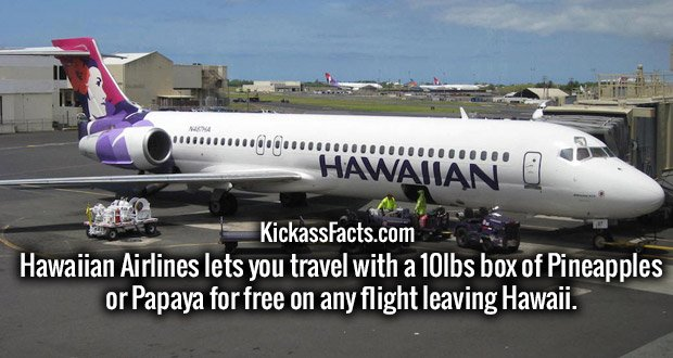 Hawaiian Airlines lets you travel with a 10lbs box of Pineapples or Papaya for free on any flight leaving Hawaii.