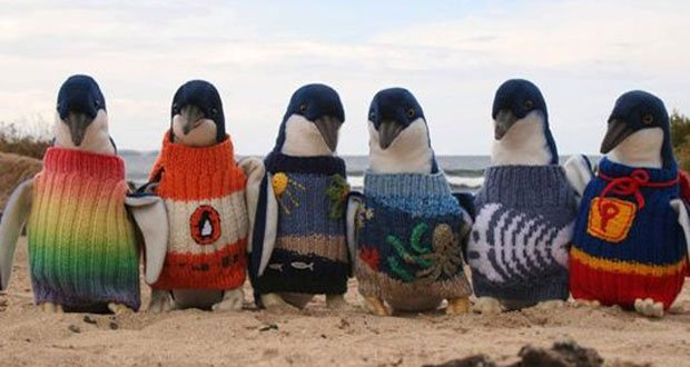 penguin-wearing-sweaters