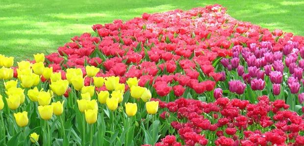 bulb-garden