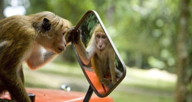 monkey-looking-in-mirror