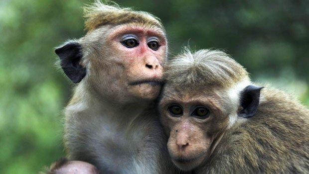 monkeys-facts