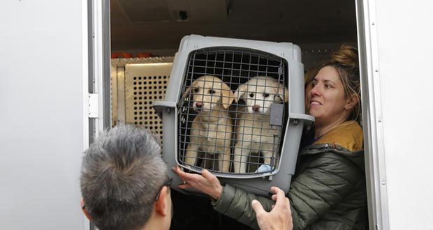 Dog_Meat_Rescue
