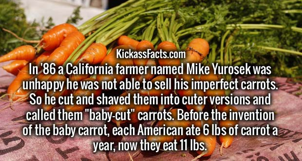 """In '86 a California farmer named Mike Yurosek was unhappy he was not able to sell his imperfect carrots. So he cut and shaved them into cuter versions and called them """"baby-cut"""" carrots. Before the invention of the baby carrot, each American ate 6 lbs of carrot a year, now they eat 11 lbs."""