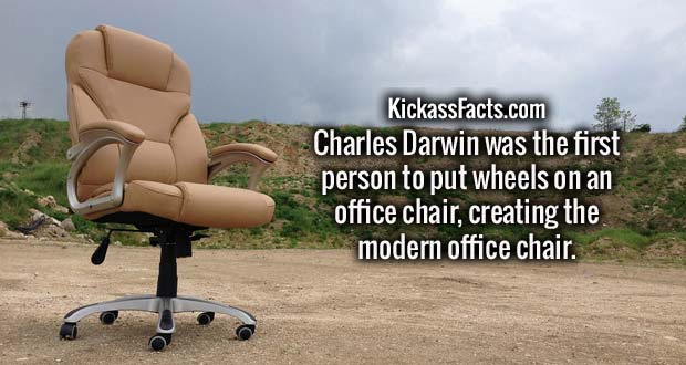 Charles Darwin was the first person to put wheels on an office chair, creating the modern office chair.