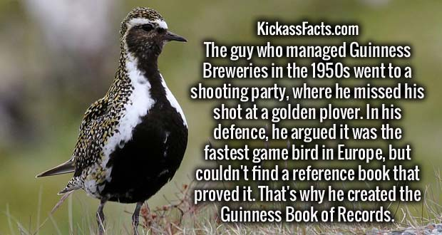 The guy who managed Guinness Breweries in the 1950s went to a shooting party, where he missed his shot at a golden plover. In his defence, he argued it was the fastest game bird in Europe, but couldn't find a reference book that proved it. That's why he created the Guinness Book of Records.