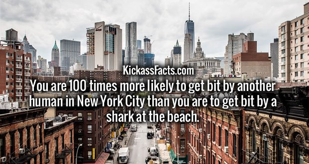 You are 100 times more likely to get bit by another human in New York City than you are to get bit by a shark at the beach.