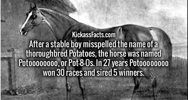After a stable boy misspelled the name of a thoroughbred Potatoes, the horse was named Potoooooooo, or Pot-8-Os. In 27 years Potoooooooo won 30 races and sired 5 winners.